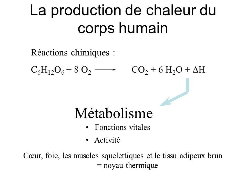 La production de chaleur du corps humain Réactions chimiques : C 6 H 12 O 6 + 8 O 2 CO 2 + 6 H 2 O + H Métabolisme Fonctions vitales Activité Cœur, fo