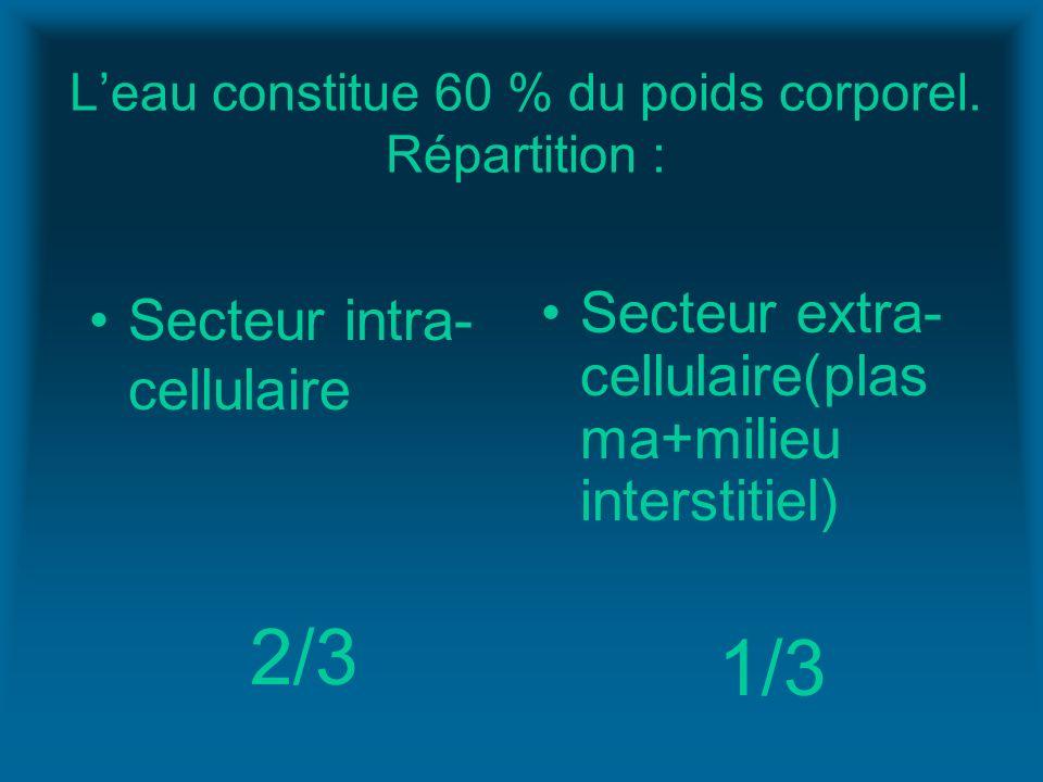 Leau constitue 60 % du poids corporel. Répartition : Secteur intra- cellulaire 2/3 Secteur extra- cellulaire(plas ma+milieu interstitiel) 1/3