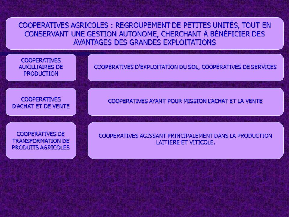 COOPERATIVES AUXILLIAIRES DE PRODUCTION COOPÉRATIVES DEXPLOITATION DU SOL, COOPÉRATIVES DE SERVICES COOPERATIVES AGRICOLES : REGROUPEMENT DE PETITES U