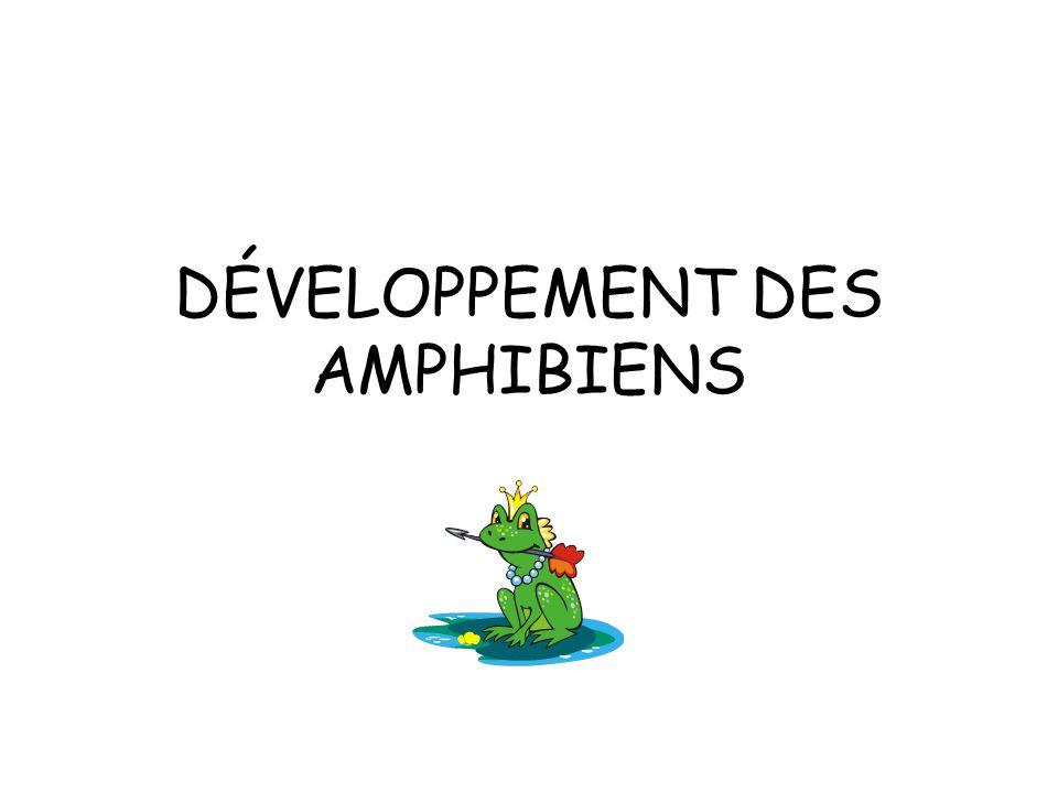 DÉVELOPPEMENT DES AMPHIBIENS