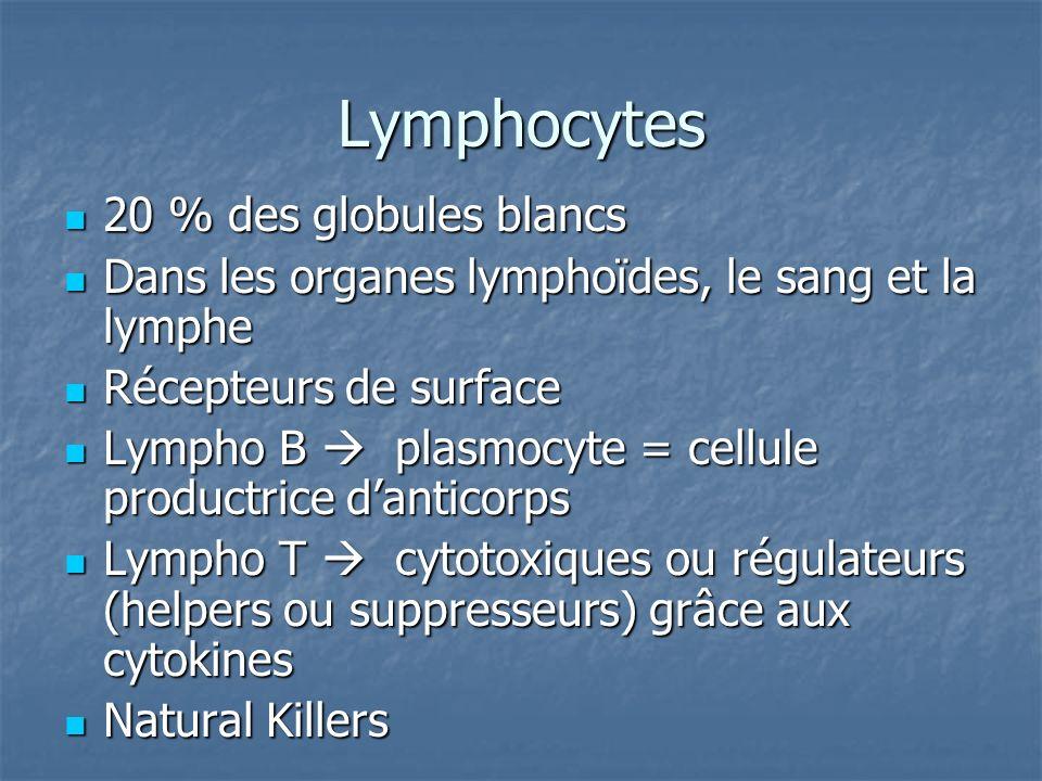 Lymphocytes 20 % des globules blancs 20 % des globules blancs Dans les organes lymphoïdes, le sang et la lymphe Dans les organes lymphoïdes, le sang e
