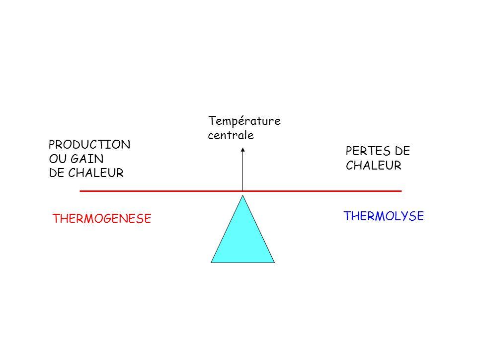 PRODUCTION OU GAIN DE CHALEUR PERTES DE CHALEUR Température centrale THERMOGENESE THERMOLYSE