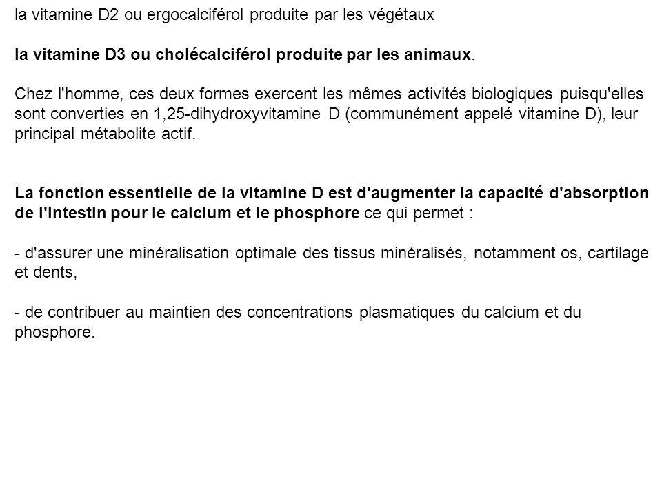 Deux formes de vitamine D existent : la vitamine D2 ou ergocalciférol produite par les végétaux la vitamine D3 ou cholécalciférol produite par les ani