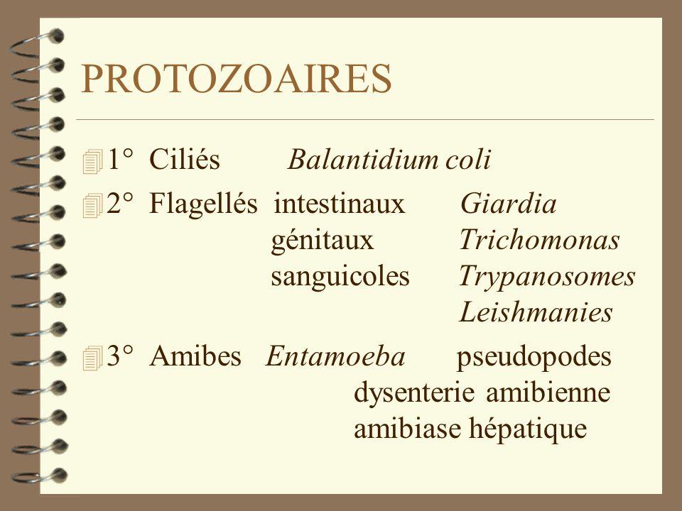 PROTOZOAIRES 4 1° Ciliés Balantidium coli 4 2° Flagellés intestinaux Giardia génitaux Trichomonas sanguicoles Trypanosomes Leishmanies 4 3° Amibes Ent