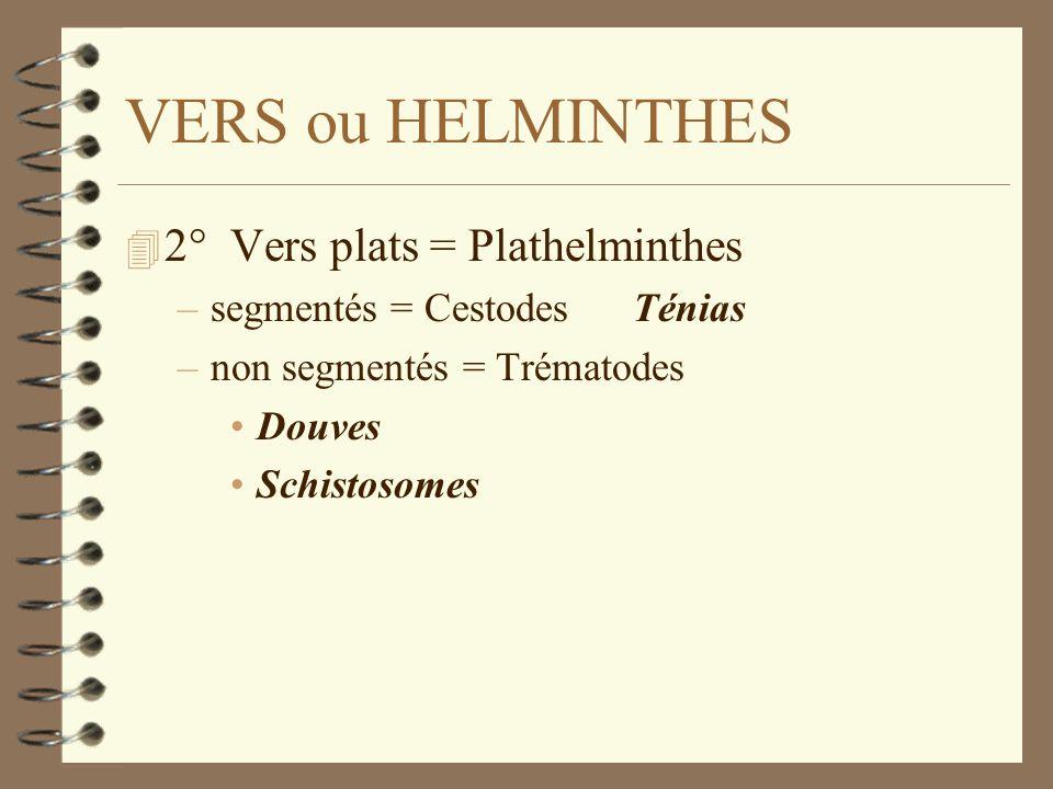 VERS ou HELMINTHES 4 2° Vers plats = Plathelminthes –segmentés = Cestodes Ténias –non segmentés = Trématodes Douves Schistosomes