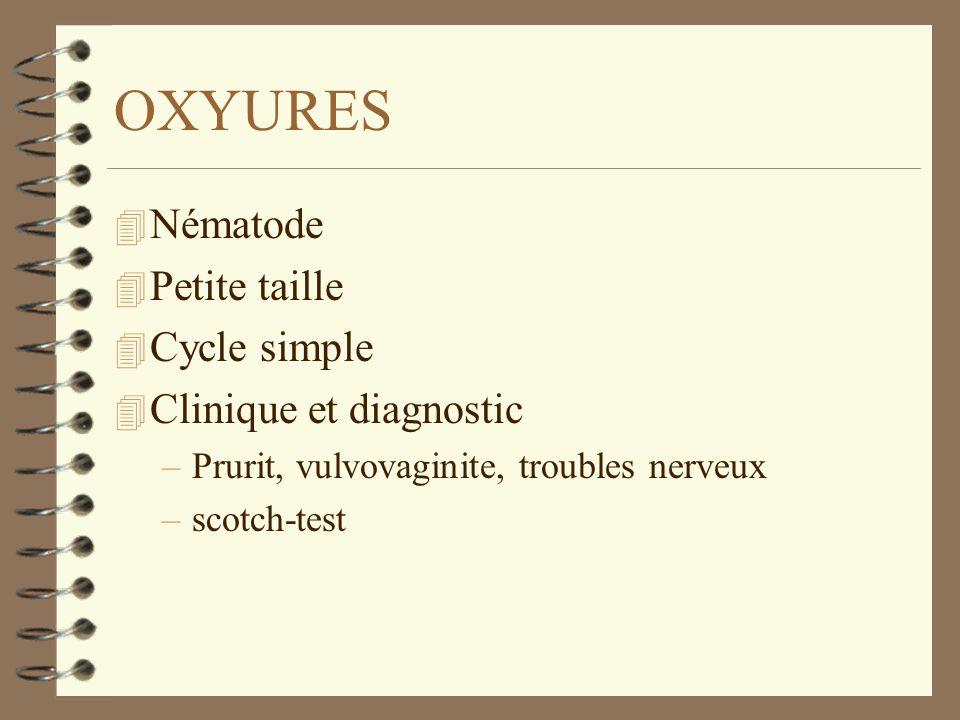 OXYURES 4 Nématode 4 Petite taille 4 Cycle simple 4 Clinique et diagnostic –Prurit, vulvovaginite, troubles nerveux –scotch-test