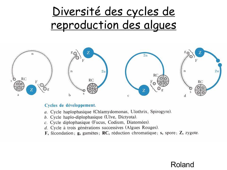 Diversité des cycles de reproduction des algues Roland