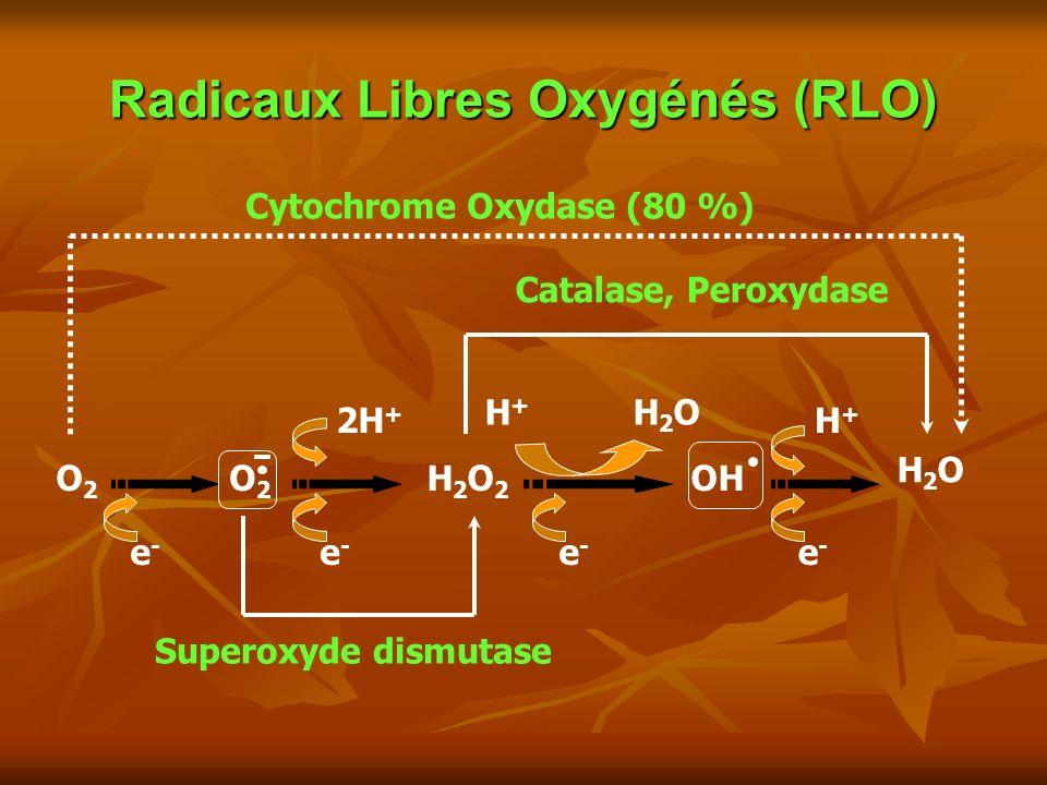 Radicaux Libres Oxygénés (RLO) e-e- e-e- O2O2 O2O2 OH H2OH2O H2O2H2O2 e-e- e-e- e-e- e-e- 2H + H+H+ H2OH2O H+H+ Catalase, Peroxydase Superoxyde dismutase Cytochrome Oxydase (80 %)