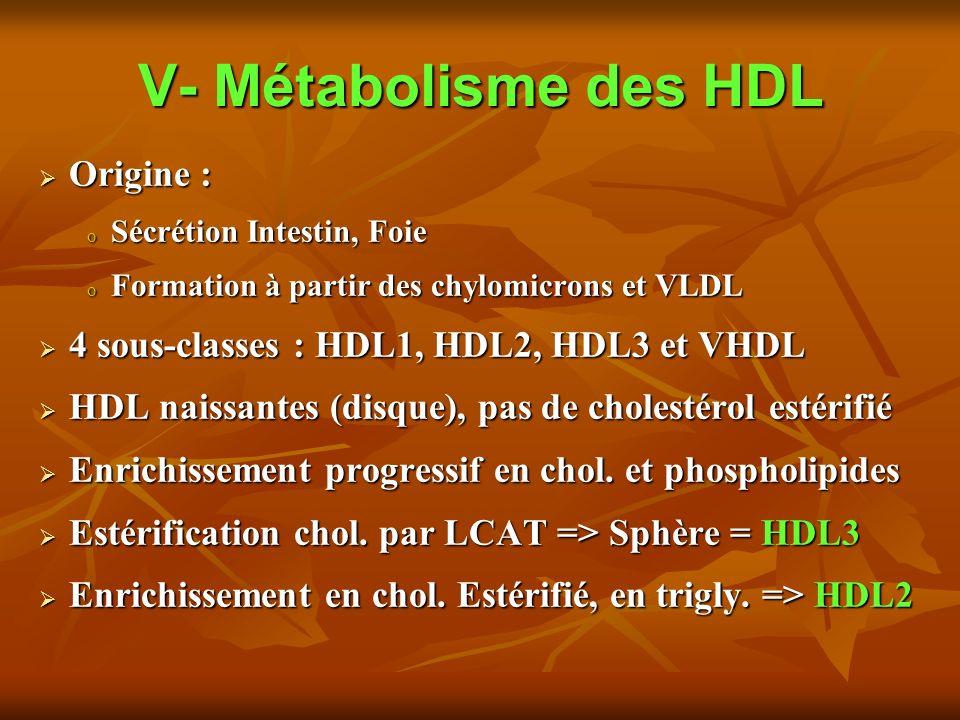 V- Métabolisme des HDL Origine : Origine : o Sécrétion Intestin, Foie o Formation à partir des chylomicrons et VLDL 4 sous-classes : HDL1, HDL2, HDL3 et VHDL 4 sous-classes : HDL1, HDL2, HDL3 et VHDL HDL naissantes (disque), pas de cholestérol estérifié HDL naissantes (disque), pas de cholestérol estérifié Enrichissement progressif en chol.