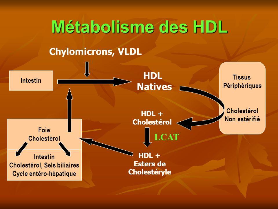 Métabolisme des HDL Intestin Foie Cholestérol Tissus Périphériques Cholestérol Non estérifié HDL Natives Intestin Cholestérol, Sels biliaires Cycle entéro-hépatique Chylomicrons, VLDL HDL + Cholestérol HDL + Esters de Cholestéryle LCAT