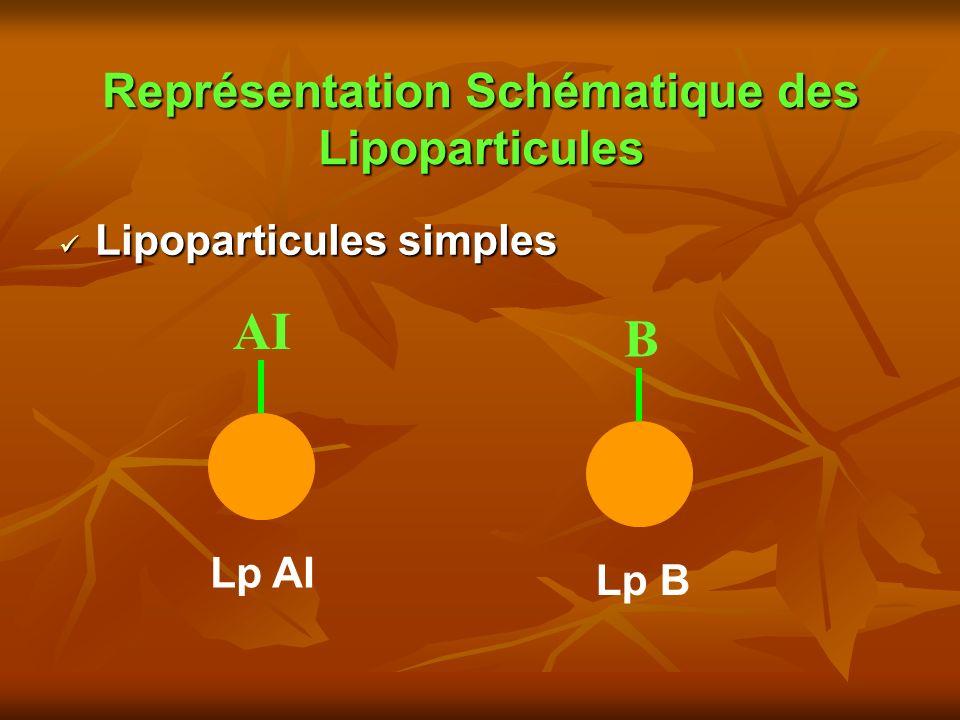 Représentation Schématique des Lipoparticules Lipoparticules simples Lipoparticules simples AI B Lp AI Lp B