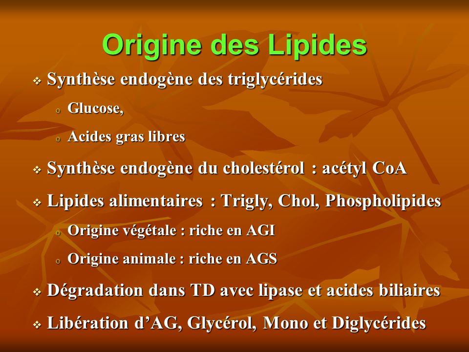 Origine des Lipides Synthèse endogène des triglycérides Synthèse endogène des triglycérides o Glucose, o Acides gras libres Synthèse endogène du cholestérol : acétyl CoA Synthèse endogène du cholestérol : acétyl CoA Lipides alimentaires : Trigly, Chol, Phospholipides Lipides alimentaires : Trigly, Chol, Phospholipides o Origine végétale : riche en AGI o Origine animale : riche en AGS Dégradation dans TD avec lipase et acides biliaires Dégradation dans TD avec lipase et acides biliaires Libération dAG, Glycérol, Mono et Diglycérides Libération dAG, Glycérol, Mono et Diglycérides