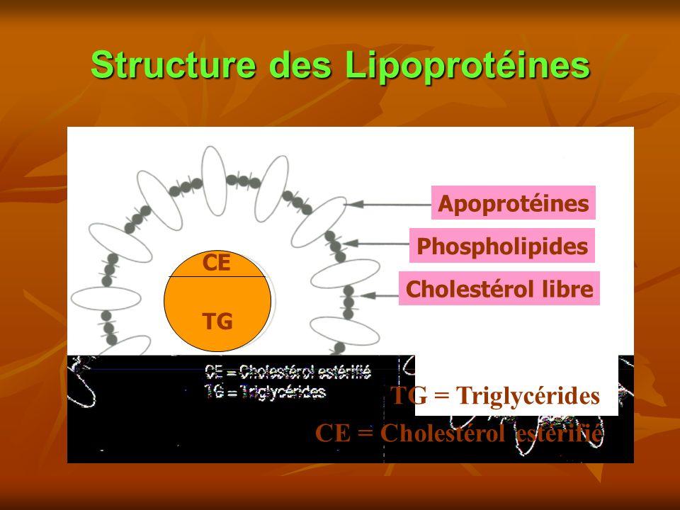Structure des Lipoprotéines Apoprotéines Phospholipides Cholestérol libre CE = Cholestérol estérifié TG = Triglycérides CE TG
