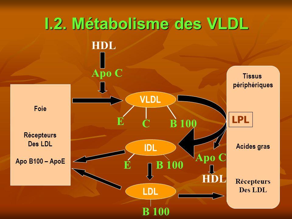 I.2. Métabolisme des VLDL B 100 Apo C HDL B 100 LDL Foie Récepteurs Des LDL Apo B100 – ApoE Tissus périphériques Acides gras Récepteurs Des LDL LPL HD
