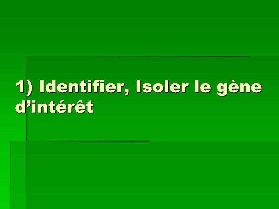 1) Identifier, Isoler le gène dintérêt