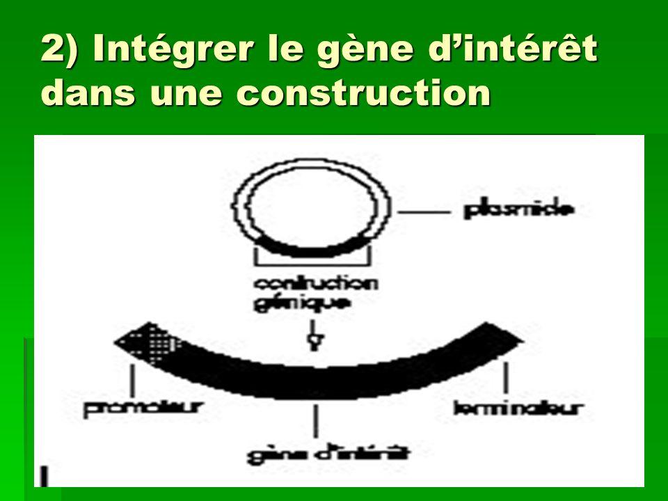 2) Intégrer le gène dintérêt dans une construction
