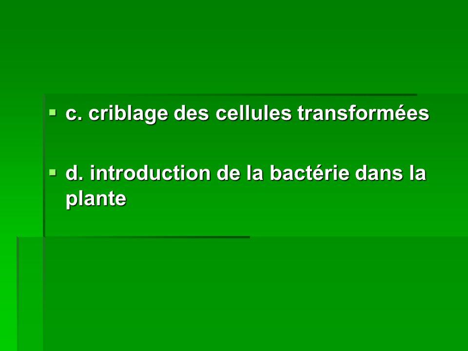 c. criblage des cellules transformées c. criblage des cellules transformées d. introduction de la bactérie dans la plante d. introduction de la bactér