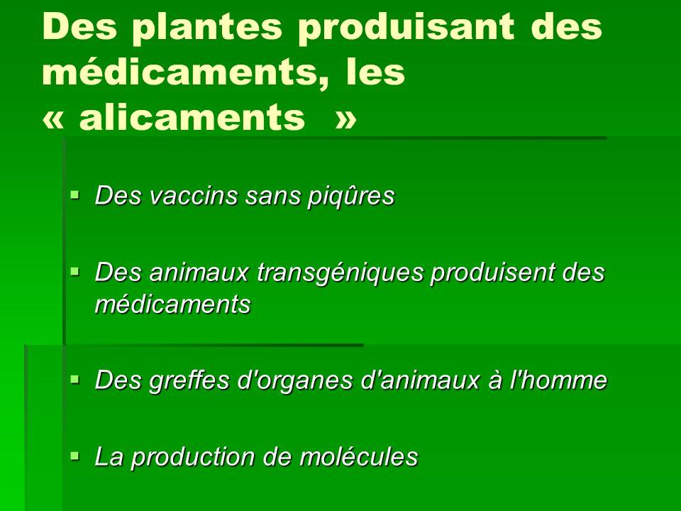 Des plantes produisant des médicaments, les « alicaments » Des vaccins sans piqûres Des vaccins sans piqûres Des animaux transgéniques produisent des