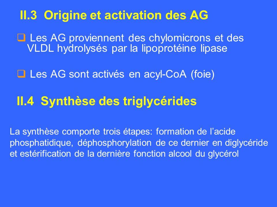 II.3 Origine et activation des AG Les AG proviennent des chylomicrons et des VLDL hydrolysés par la lipoprotéine lipase Les AG sont activés en acyl-Co