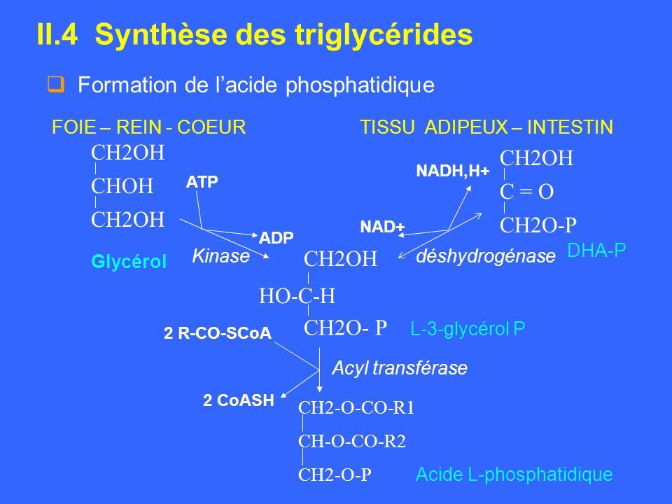 II.4 Synthèse des triglycérides Formation de lacide phosphatidique FOIE – REIN - COEURTISSU ADIPEUX – INTESTIN CH2OH C = O CH2O-P CH2OH CHOH CH2OH HO-