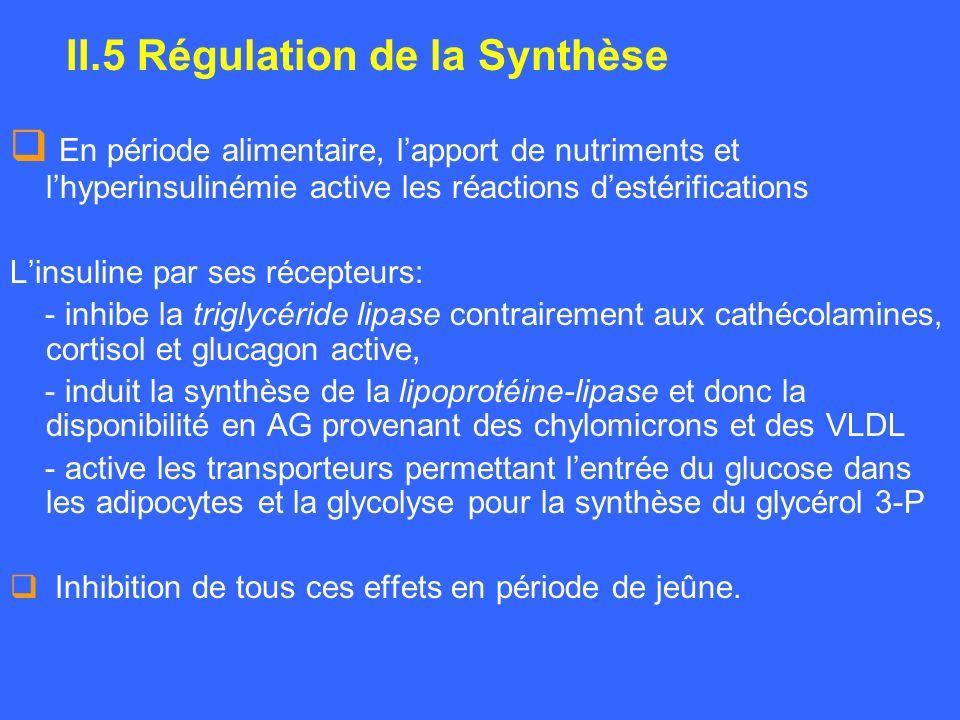En période alimentaire, lapport de nutriments et lhyperinsulinémie active les réactions destérifications Linsuline par ses récepteurs: - inhibe la tri