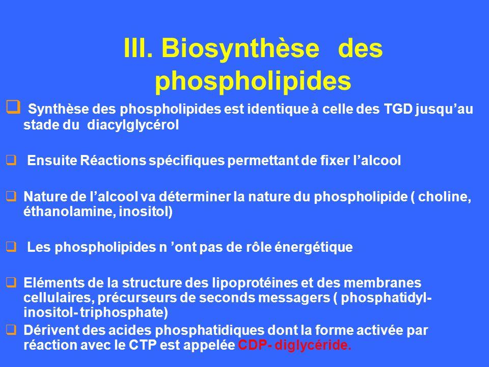 III. Biosynthèse des phospholipides Synthèse des phospholipides est identique à celle des TGD jusquau stade du diacylglycérol Ensuite Réactions spécif