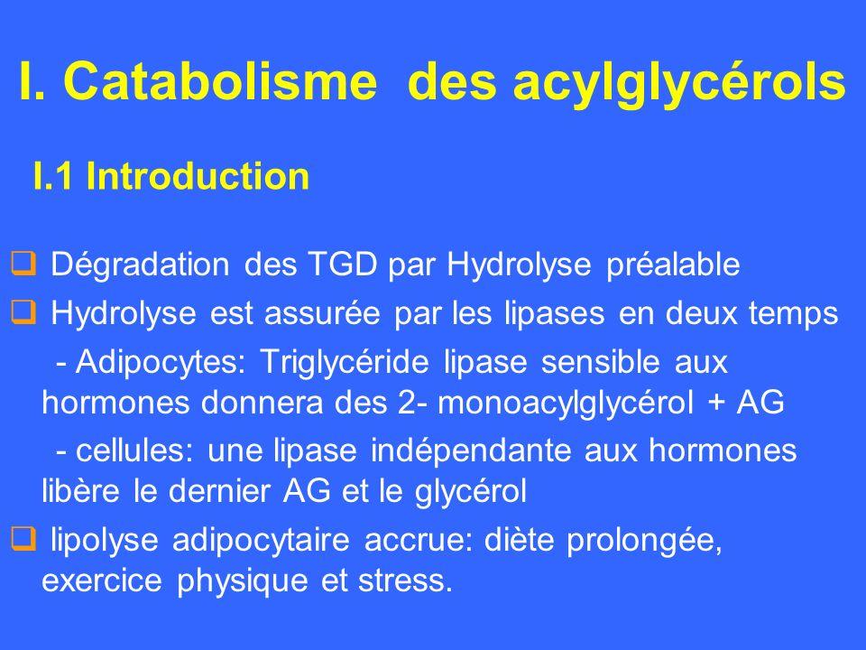 I. Catabolisme des acylglycérols Dégradation des TGD par Hydrolyse préalable Hydrolyse est assurée par les lipases en deux temps - Adipocytes: Triglyc