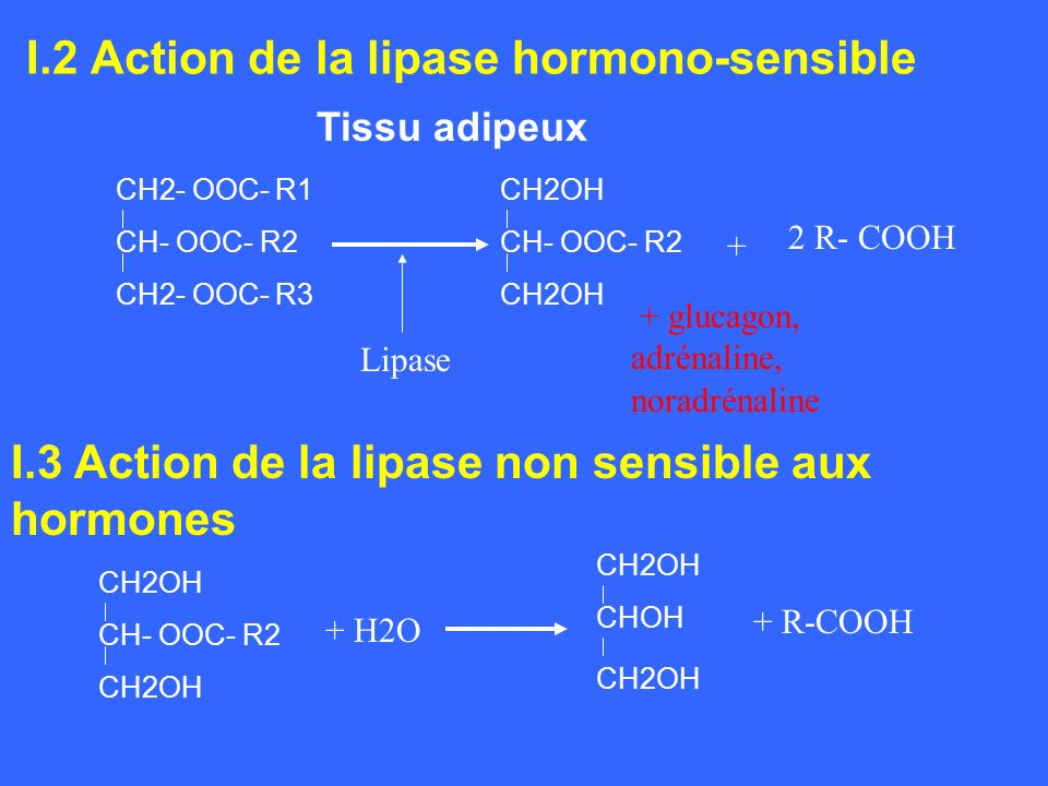 I.2 Action de la lipase hormono-sensible Tissu adipeux CH2- OOC- R1 CH- OOC- R2 CH2- OOC- R3 CH2OH CH- OOC- R2 CH2OH 2 R- COOH + Lipase + glucagon, ad