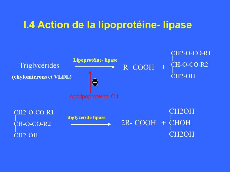 I.4 Action de la lipoprotéine- lipase Triglycérides (chylomicrons et VLDL) R- COOH+ CH2-O-CO-R1 CH-O-CO-R2 CH2-OH Lipoprotéine- lipase + Apolipoprotéi