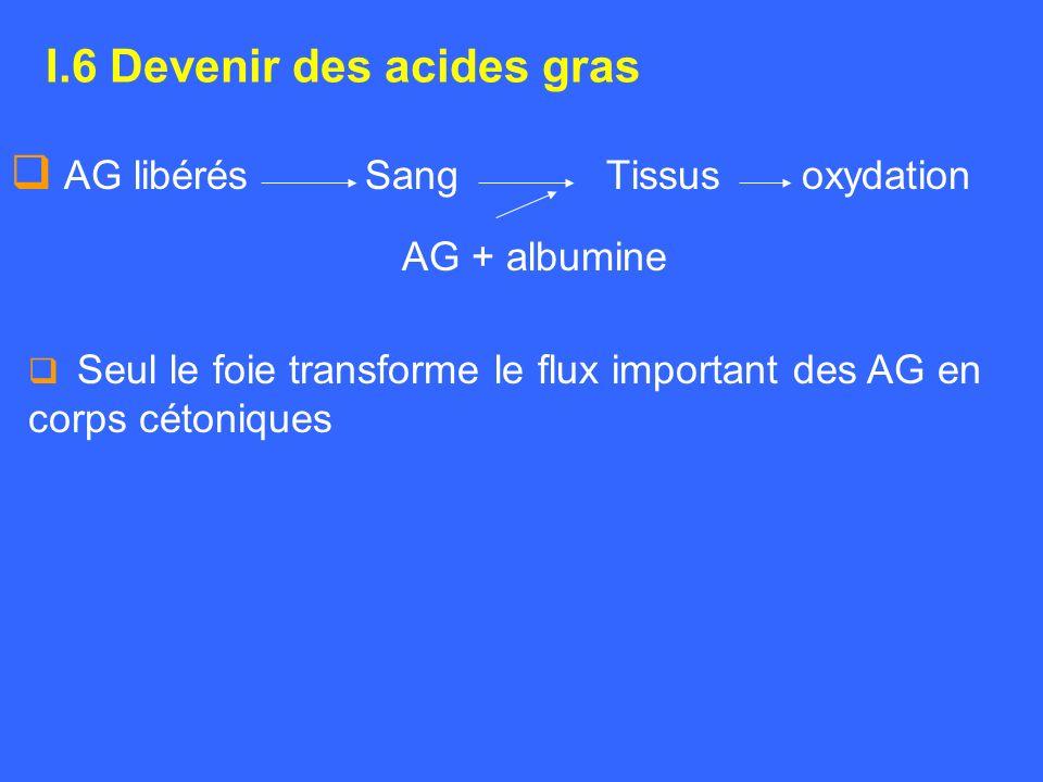 I.6 Devenir des acides gras AG libérés Sang Tissus oxydation AG + albumine Seul le foie transforme le flux important des AG en corps cétoniques