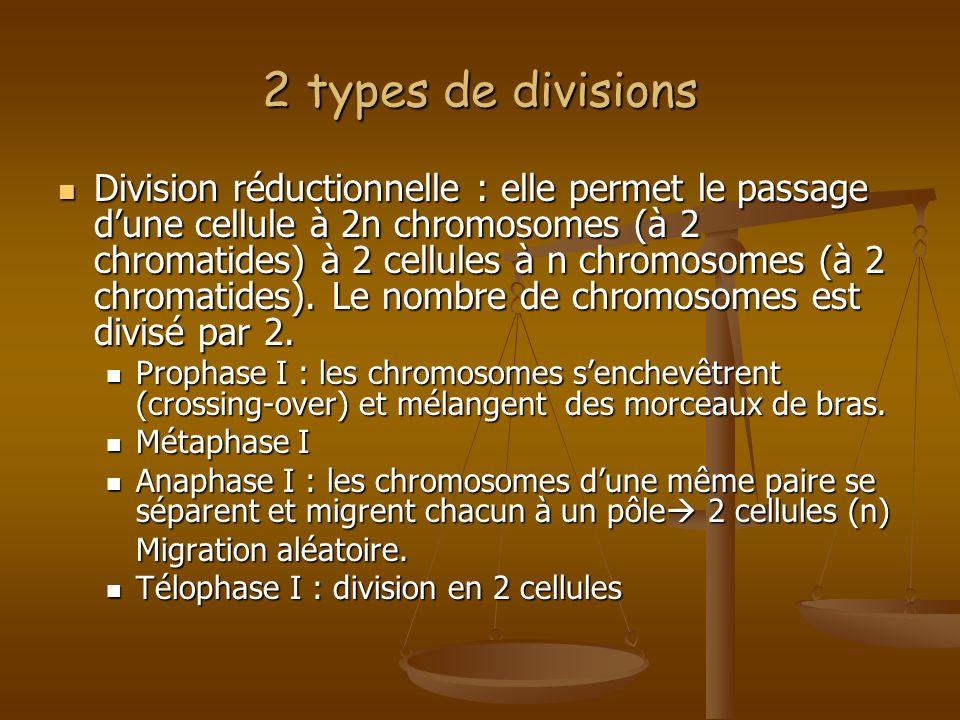 2 types de divisions Division réductionnelle : elle permet le passage dune cellule à 2n chromosomes (à 2 chromatides) à 2 cellules à n chromosomes (à