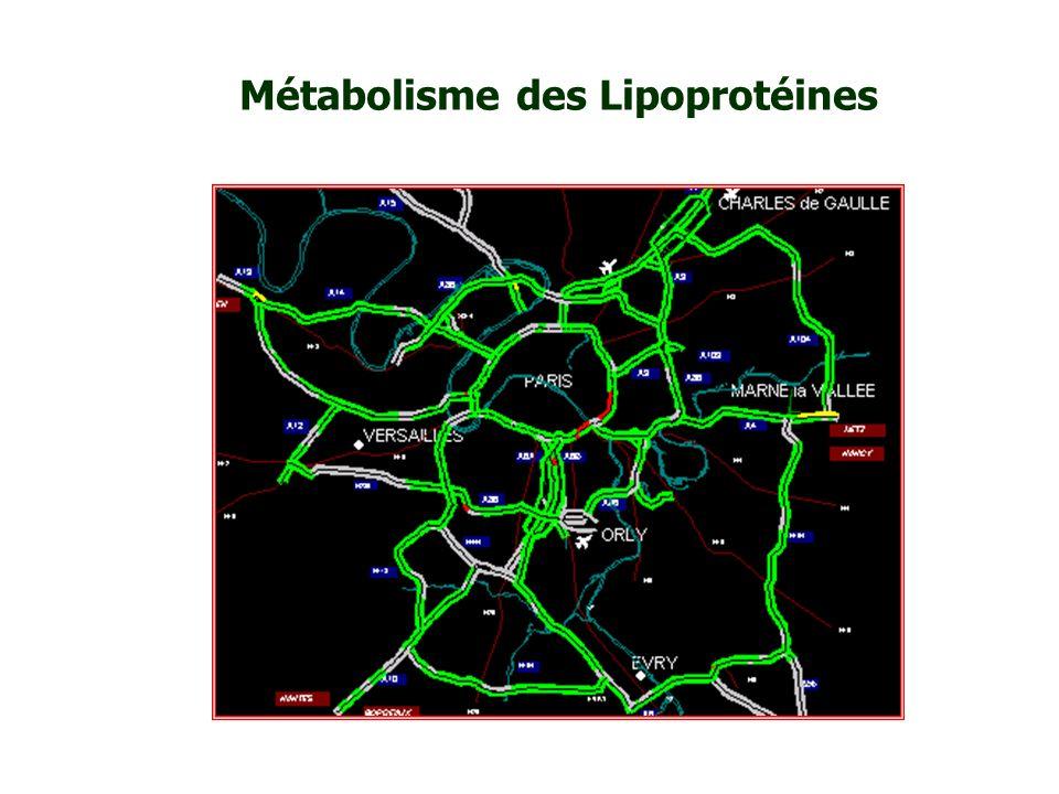 Lipoprotéines Devenir des lipides transportés Entièrement dégradables (CO 2 + H 2 O) Energie / Signaux (stockage / consommation) (messages intracellulaires) Membranes (renouvellement cellulaire) Signaux (hormones) (messages intracellulaires) Non dégradable (acides biliaires)