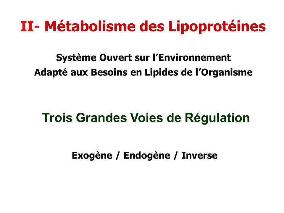 II- Métabolisme des Lipoprotéines Trois Grandes Voies de Régulation Exogène / Endogène / Inverse Système Ouvert sur lEnvironnement Adapté aux Besoins