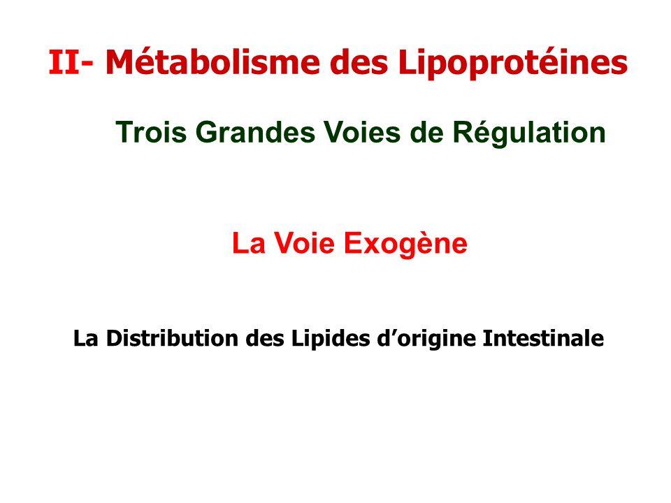 II- Métabolisme des Lipoprotéines La Voie Exogène Trois Grandes Voies de Régulation La Distribution des Lipides dorigine Intestinale