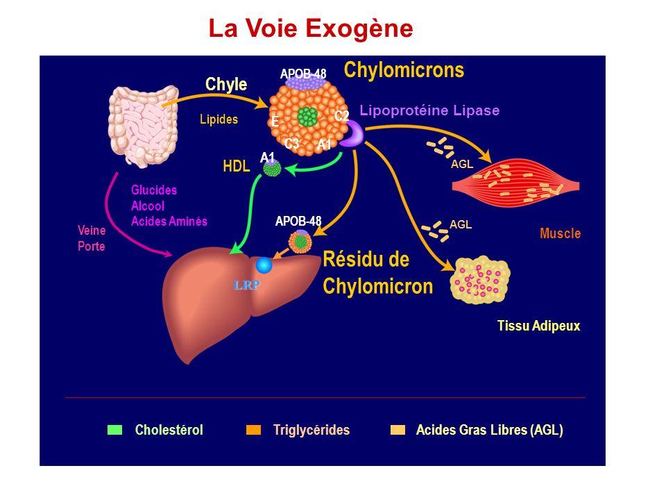 HDL A1 APOB-48 Résidu de Chylomicron Tissu Adipeux TriglycéridesCholestérolAcides Gras Libres (AGL) Chyle Lipides Chylomicrons Lipoprotéine Lipase C2