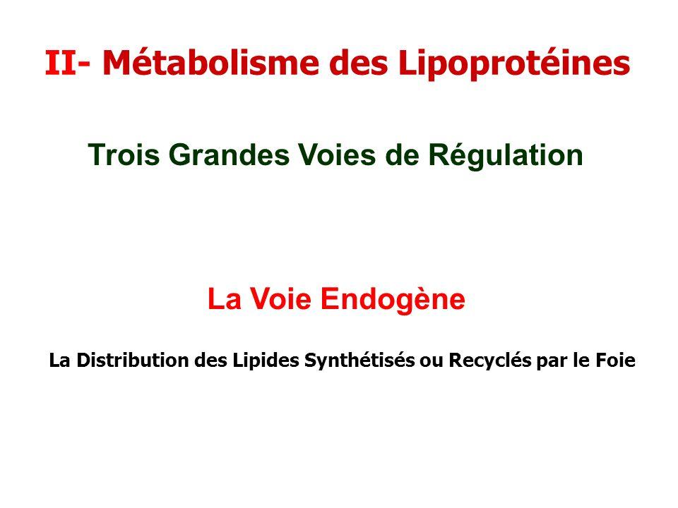 II- Métabolisme des Lipoprotéines La Voie Endogène Trois Grandes Voies de Régulation La Distribution des Lipides Synthétisés ou Recyclés par le Foie