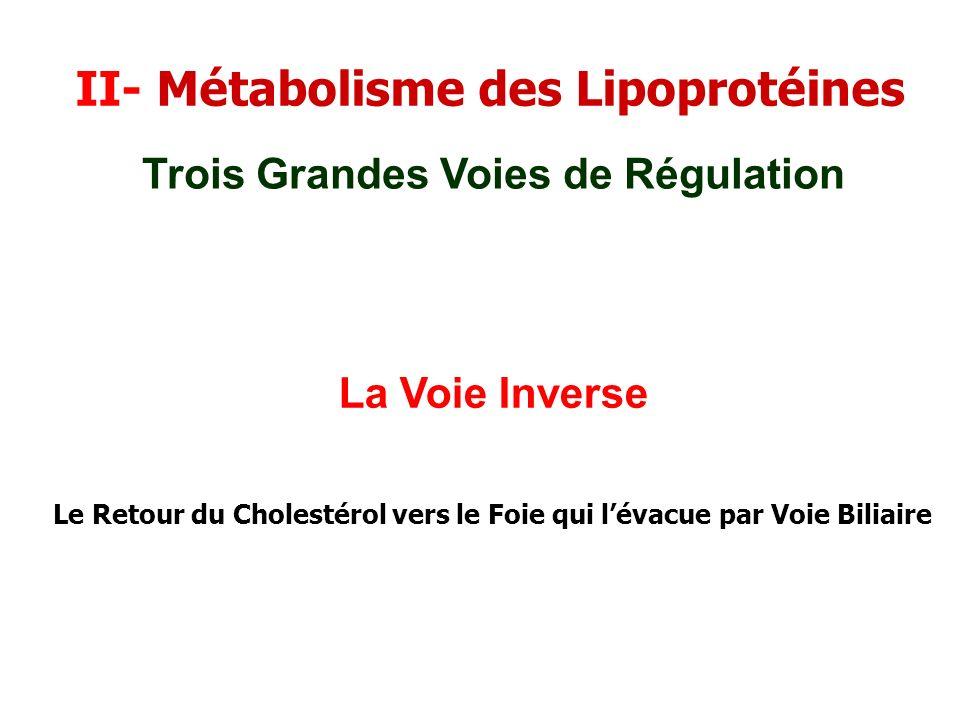II- Métabolisme des Lipoprotéines La Voie Inverse Trois Grandes Voies de Régulation Le Retour du Cholestérol vers le Foie qui lévacue par Voie Biliair