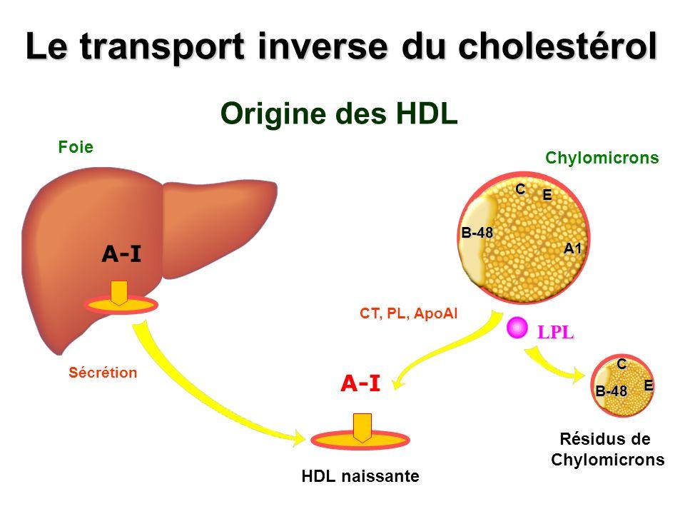 Le transport inverse du cholestérol Origine des HDL LPL B-48 C E Résidus de Chylomicrons CT, PL, ApoAI B-48 C E A1 ChylomicronsB-48 C E A1 A-I HDL nai