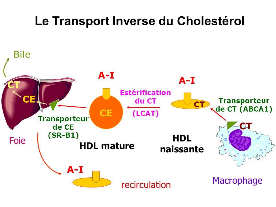 Le Transport Inverse du Cholestérol A-I Estérification du CT (LCAT) HDL mature CE Foie CE CT Bile Transporteur de CE (SR-B1) Macrophage CT A-I Transpo
