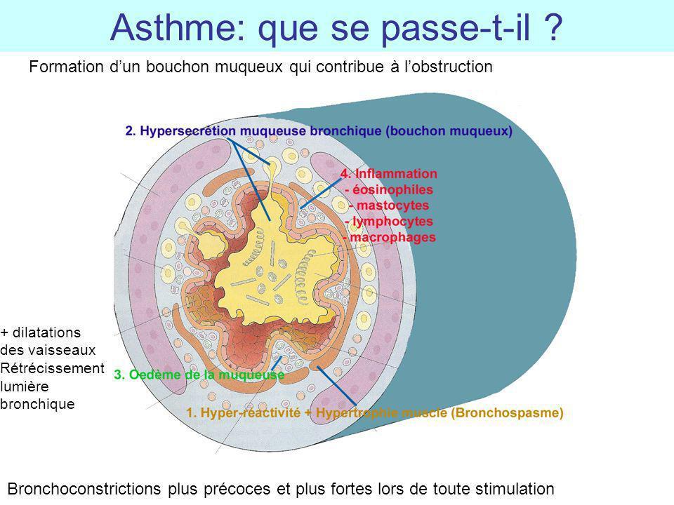 Asthme: que se passe-t-il ? Bronchoconstrictions plus précoces et plus fortes lors de toute stimulation Formation dun bouchon muqueux qui contribue à