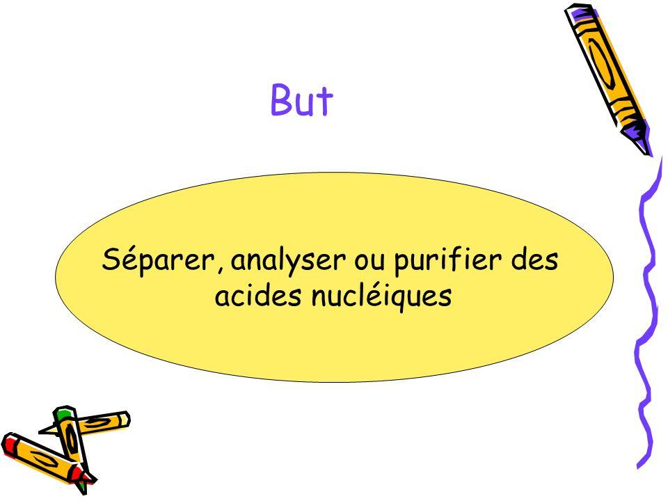 But Séparer, analyser ou purifier des acides nucléiques