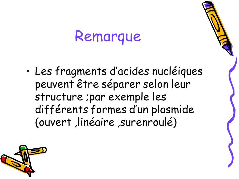 Remarque Les fragments dacides nucléiques peuvent être séparer selon leur structure ;par exemple les différents formes dun plasmide (ouvert,linéaire,s