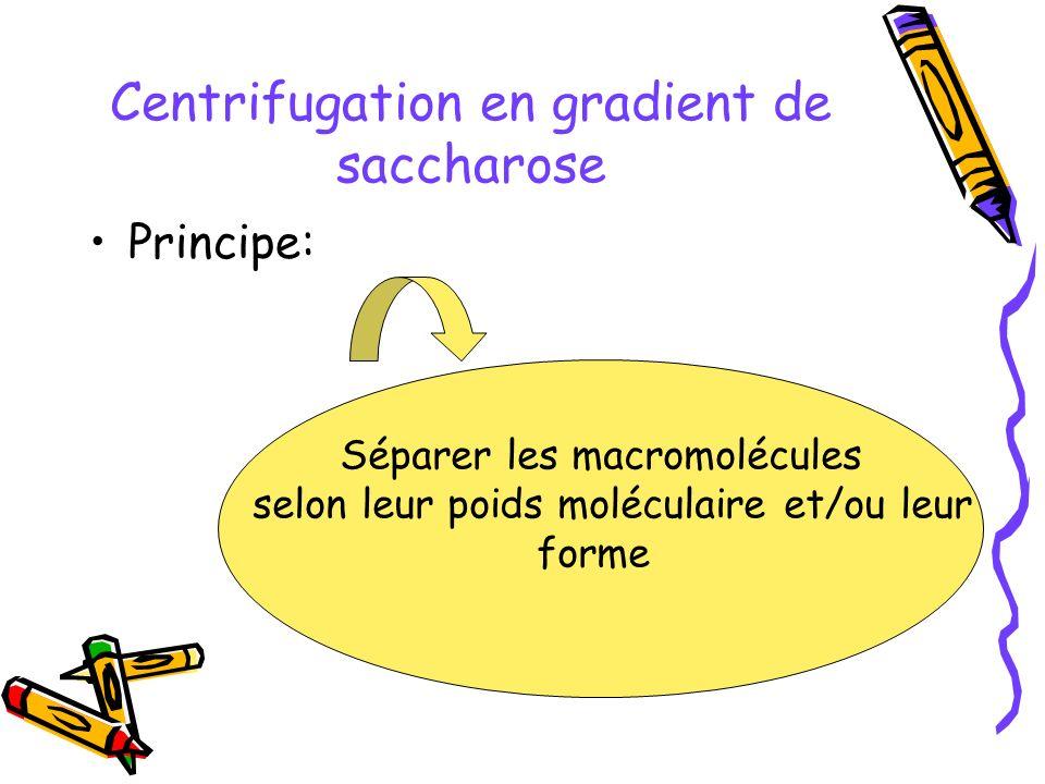 Centrifugation en gradient de saccharose Principe: Séparer les macromolécules selon leur poids moléculaire et/ou leur forme