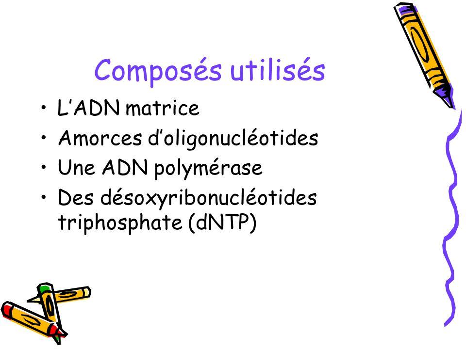 Composés utilisés LADN matrice Amorces doligonucléotides Une ADN polymérase Des désoxyribonucléotides triphosphate (dNTP)