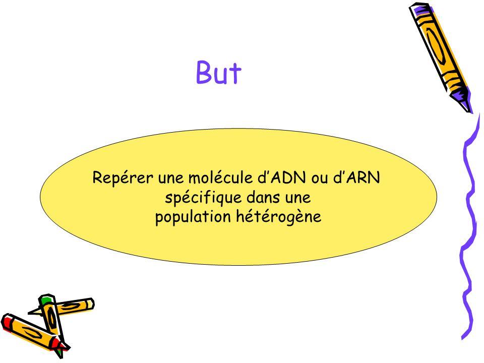 But Repérer une molécule dADN ou dARN spécifique dans une population hétérogène