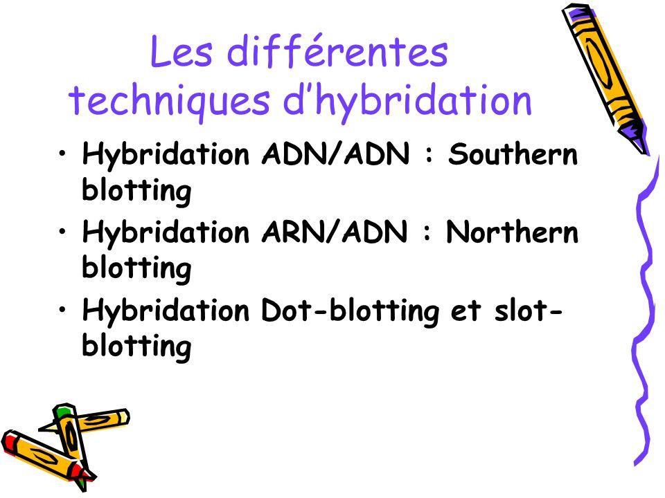 Les différentes techniques dhybridation Hybridation ADN/ADN : Southern blotting Hybridation ARN/ADN : Northern blotting Hybridation Dot-blotting et sl