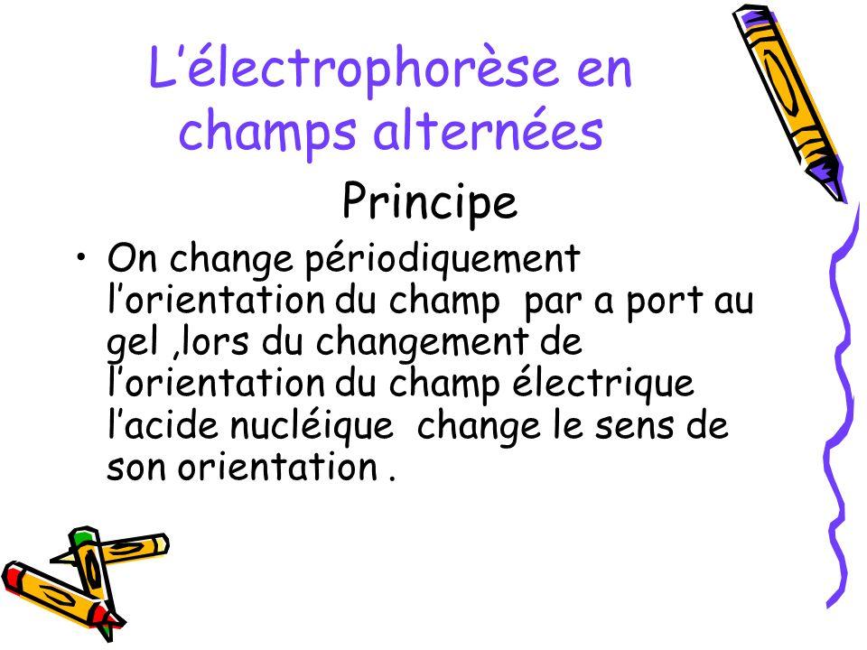 Lélectrophorèse en champs alternées Principe On change périodiquement lorientation du champ par a port au gel,lors du changement de lorientation du ch
