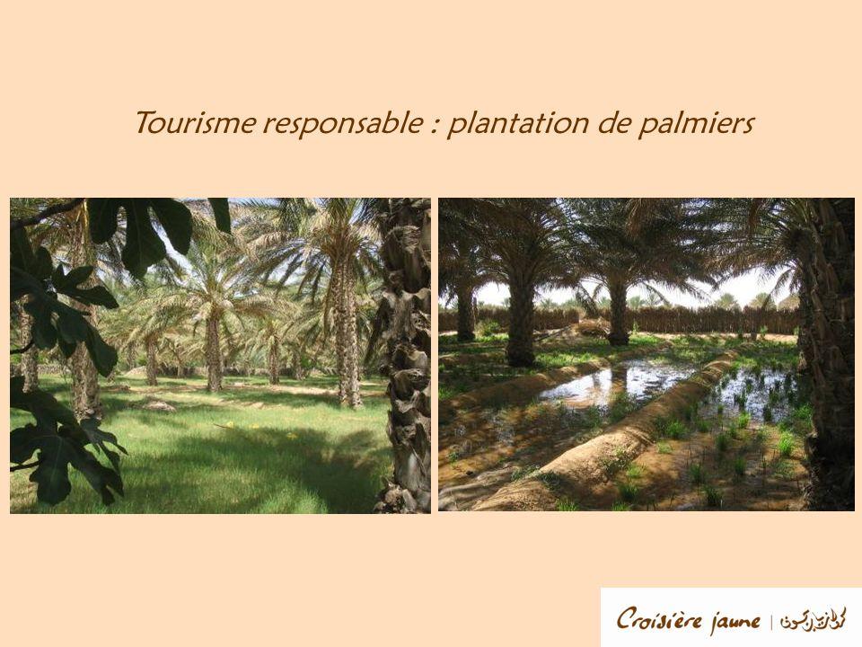 Tourisme responsable : plantation de palmiers
