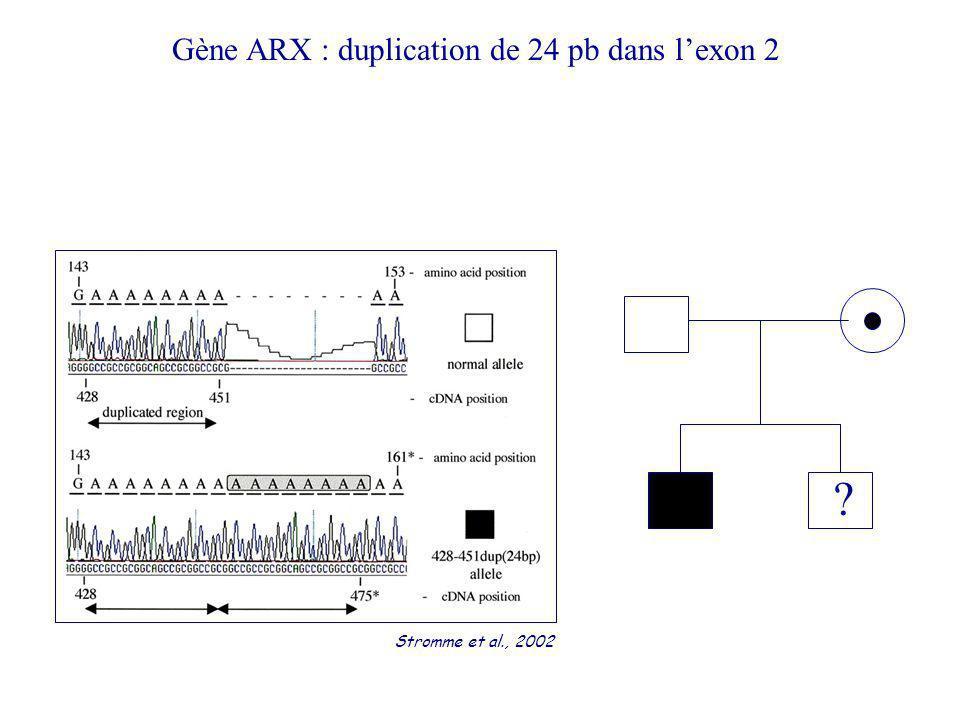 ? Gène ARX : duplication de 24 pb dans lexon 2 Stromme et al., 2002