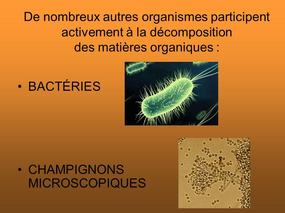 De nombreux autres organismes participent activement à la décomposition des matières organiques : BACTÉRIES CHAMPIGNONS MICROSCOPIQUES
